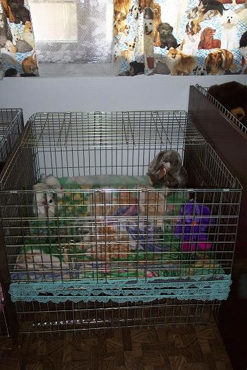 Clic Kennels Puppy Nursery